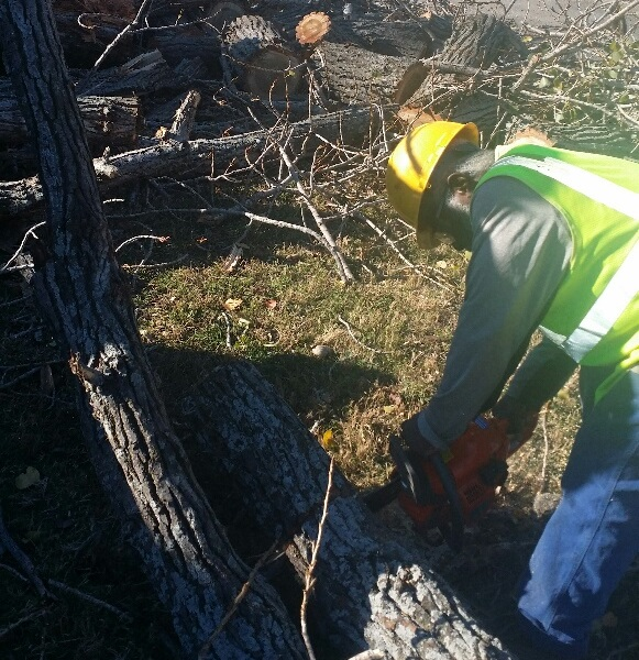 full service tree trimming and tree removal in DFW